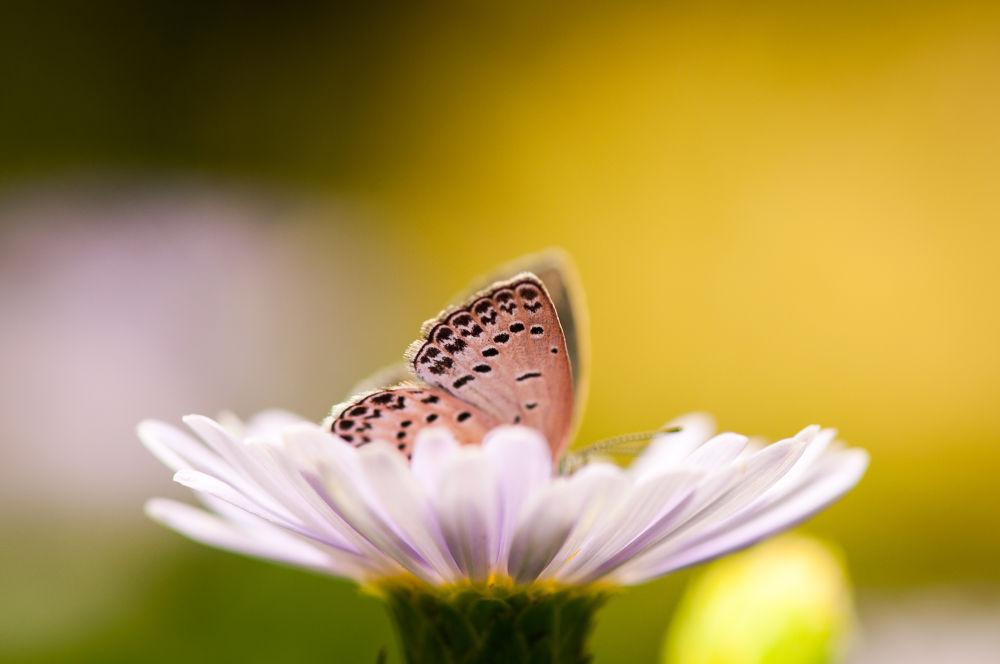 Photo in Nature #joe wabe #butterfly #flower #summer #micro