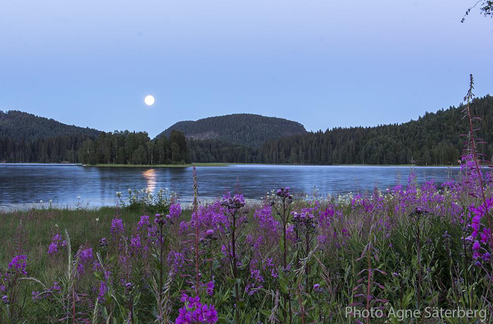 Photo in Landscape #night #agne säterberg #lappudden #nordingrå #sweden #high coast #world heritage