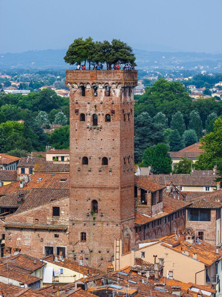 Photo in Travel #lightroom plugin #guinigi #italia #italien #italy #lucca #torre guinigi #toscana #toskana #turm #tuscany #album (toscana) #tower #roofs