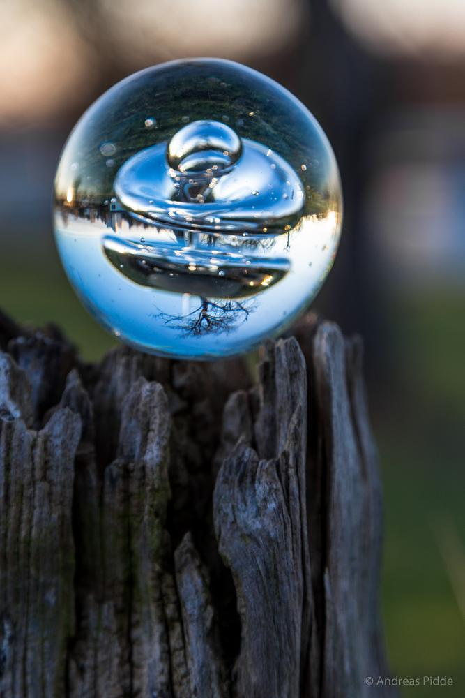 Photo in Still Life #bowl #tree #refraction
