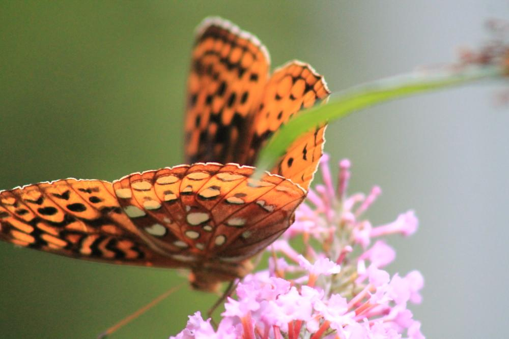 Photo in Nature #butterfly #pink #flower