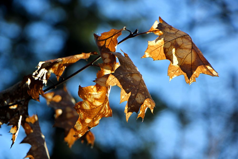 Photo in Nature #leaves #nature #morning #sunlight #backlighting