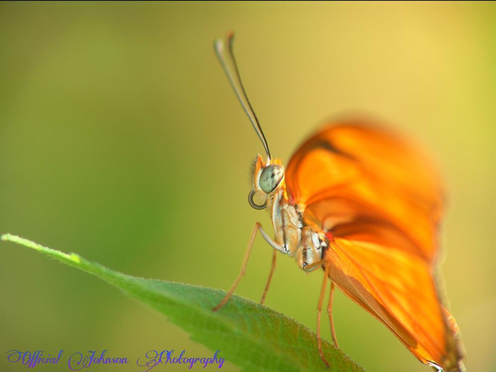 Photo in Macro #butterfly #happy