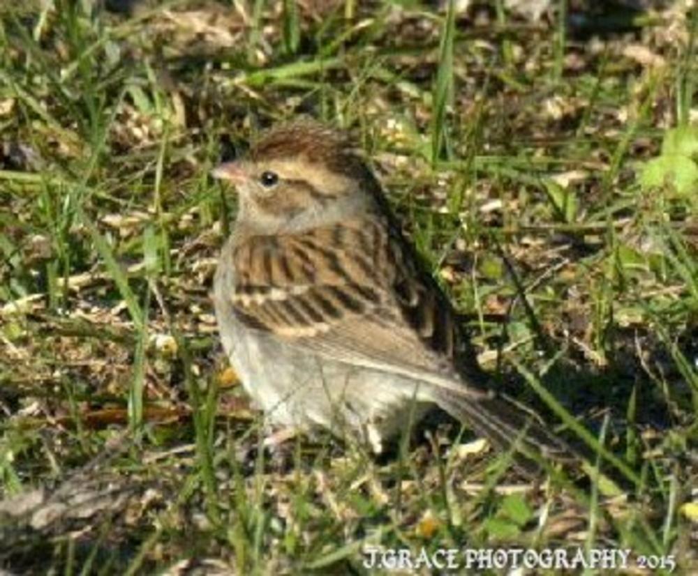 Photo in Animal #nature #bird #portrait #wildlife #nikon #tamron