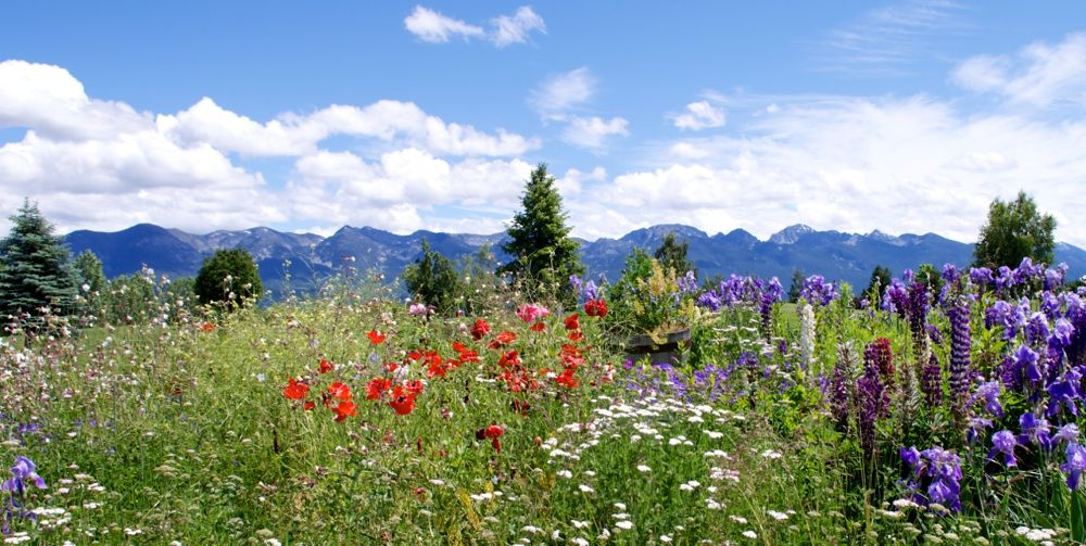 Photo in Landscape #flowers #mountains #montana