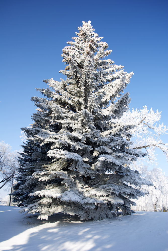 Photo in Nature #winter