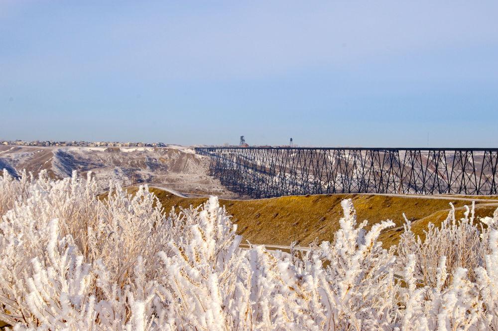 Photo in Rural #jackfrost
