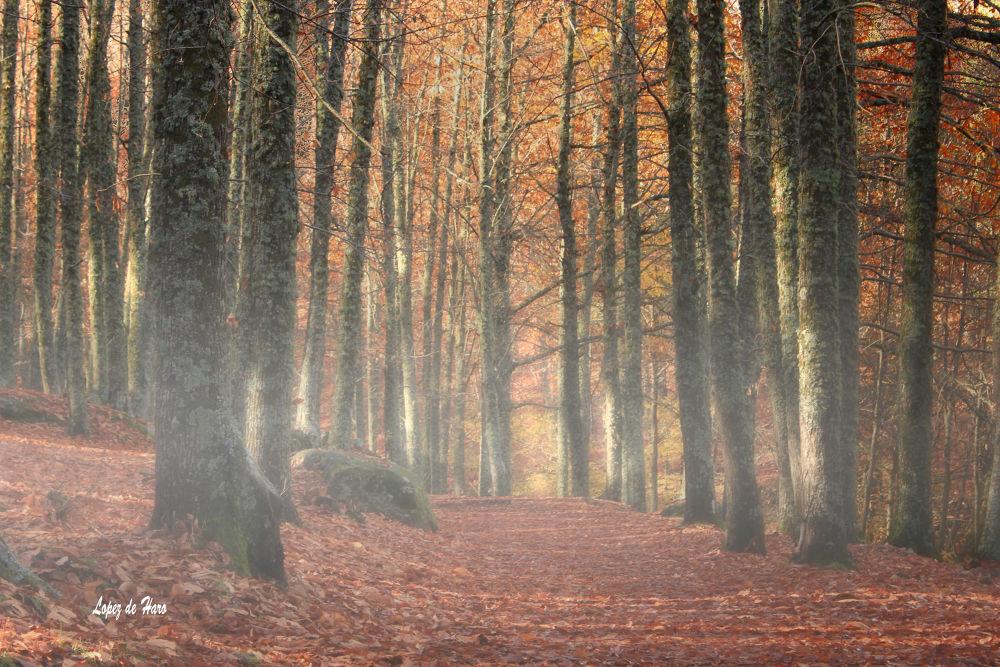 Photo in Nature #bosque