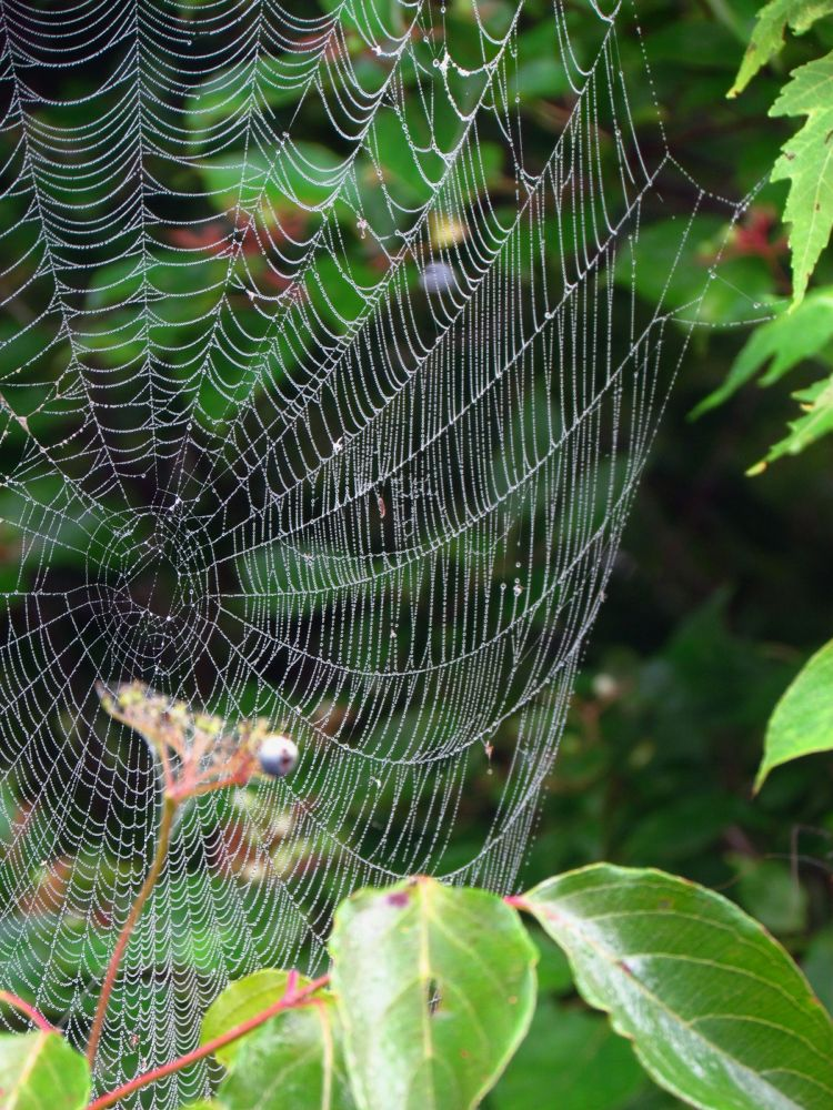 Photo in Random #web #webs #spider web #abstract #fine art #nature