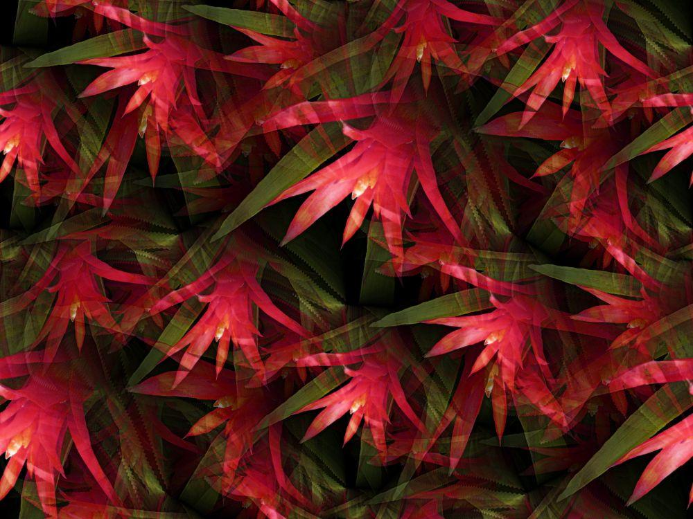 Photo in Random #flower #red #nature #seamless #manipulated