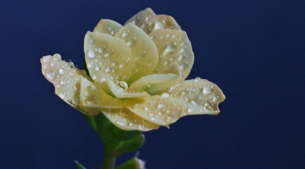 Photo in Macro #flower #garden #yellow #close-up #rain #drops #nature