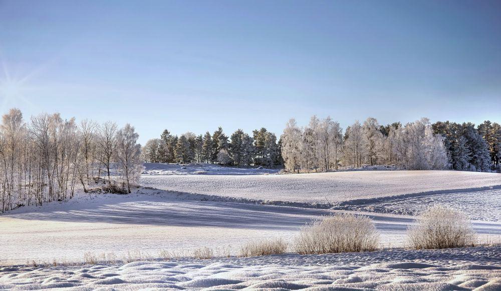 Photo in Landscape #sun #winter #trees #fields