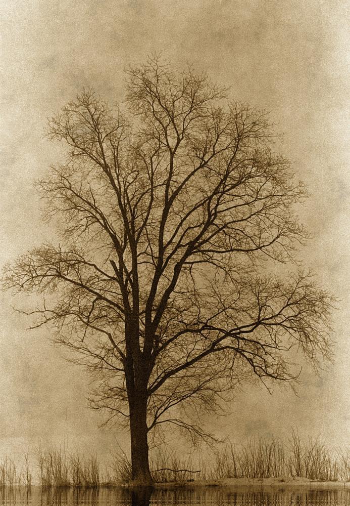 Photo in Landscape #tree #lonely #fields