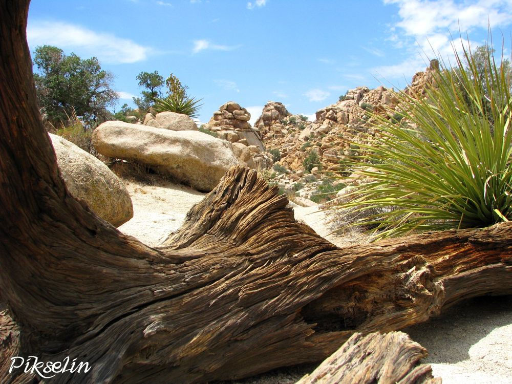 Photo in Landscape #joshua tree #national park