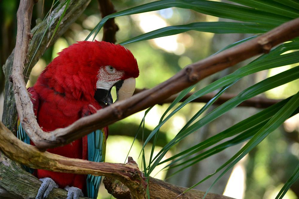 Photo in Animal #parrot #bird #wild