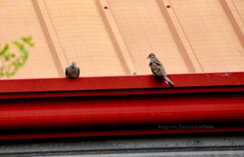 Photo in Still Life #birds #nature
