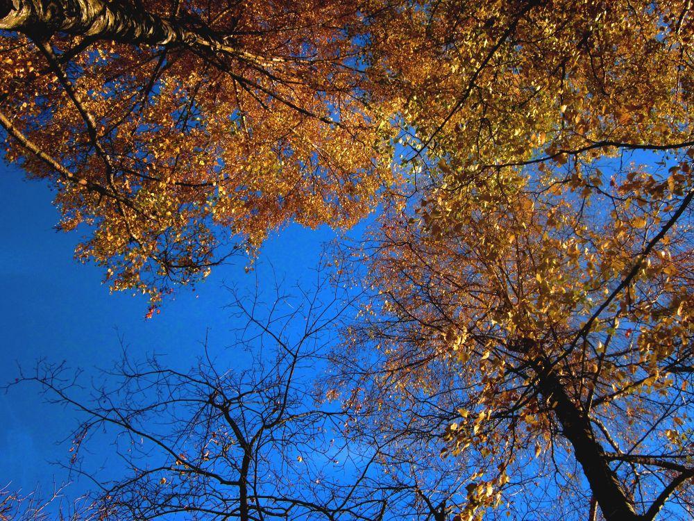 Photo in Nature #tree #sky #fall #autumn