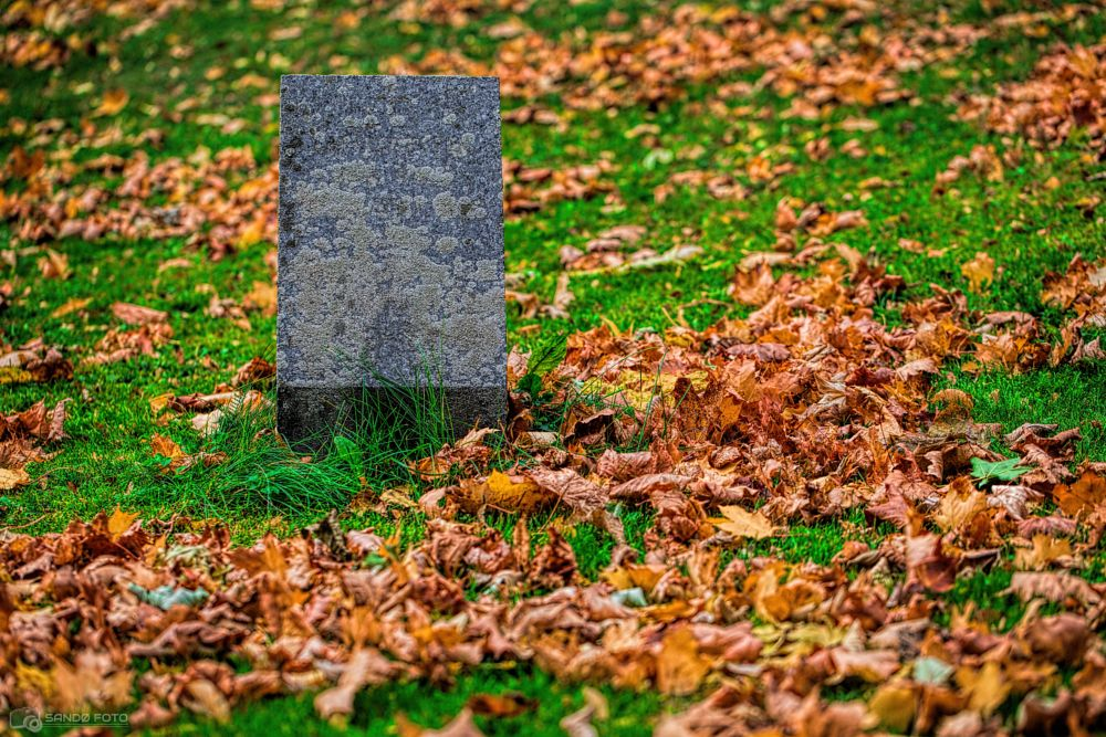 Photo in Nature #forgotten tombstone #tombstone #forgotten #leafs #green #grass #nature #orange