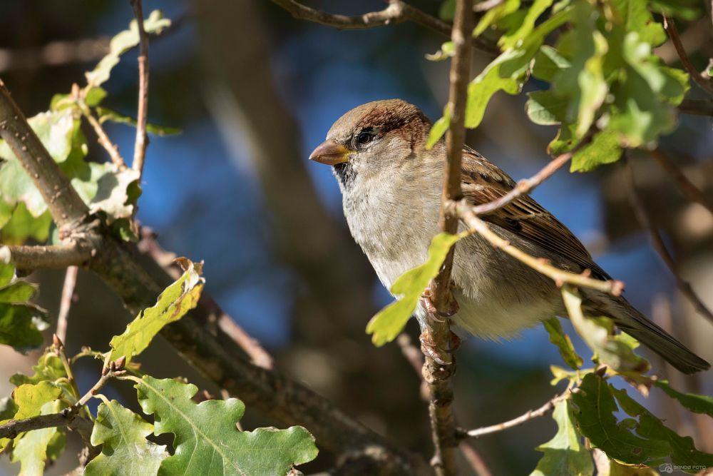 Photo in Animal #sparrow #wildlife #wild #nature #bird