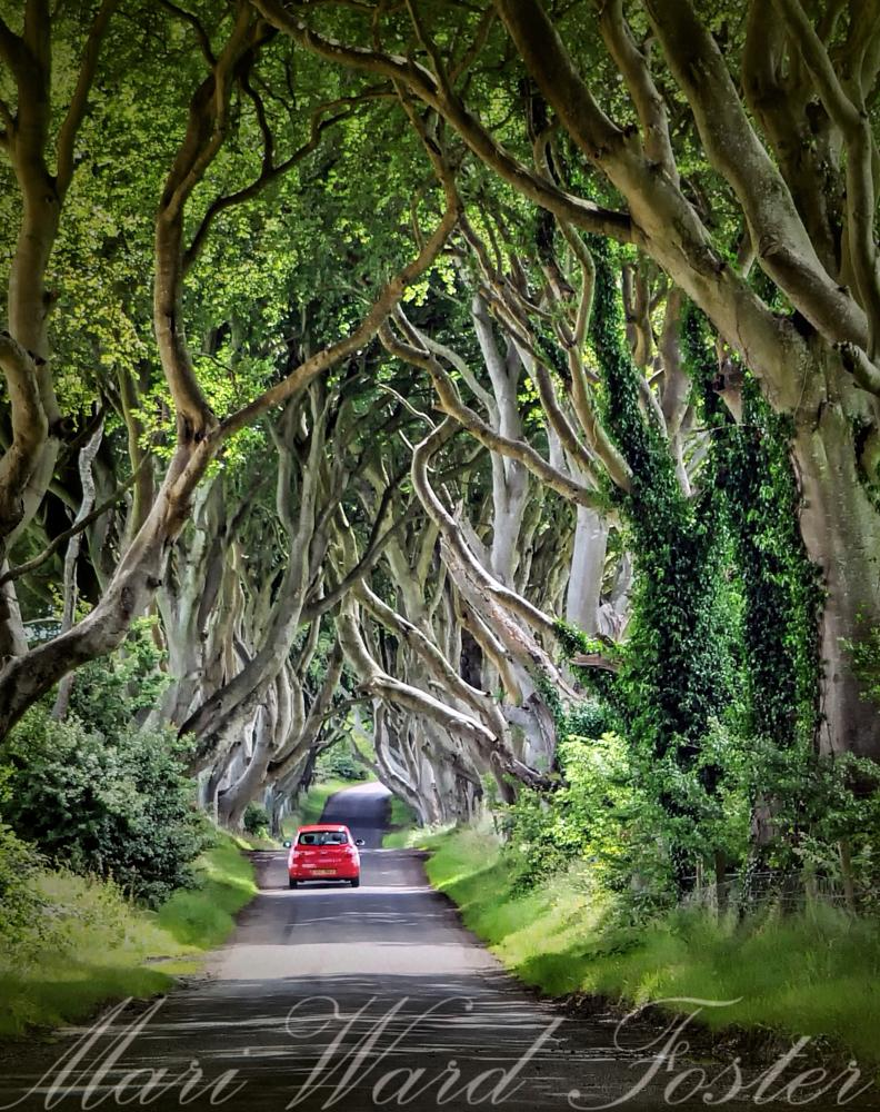 "Photo in Landscape #""northern ireland"" ""game of th #trees ""300 year-old beech tree"