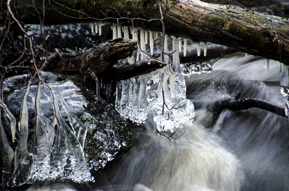 Photo in Nature #camera #walk #nature #landscape #hammarmölledamm #nikon #d5100