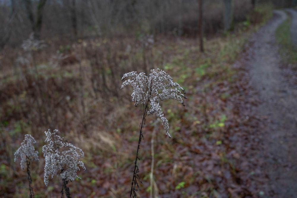Photo in Nature #biofotosyd #camera #göinge biologiska förening #kvalitetstid #landscape #nature #naturum #nikon #sweden2020 #tyringe fotoklubb #walk #z6ii #åhusfältet