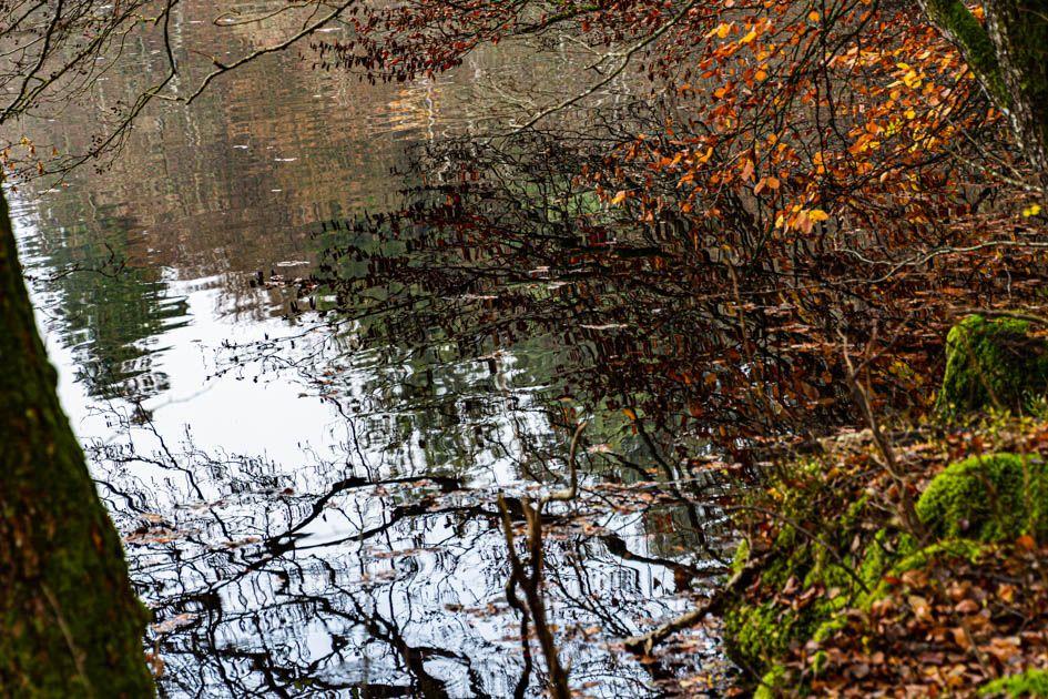 Photo in Nature #autumn leaf #biofotosyd #camera #d7200 #göinge biologiska förening #hammarmölledamm #kvalitetstid #landscape #nature #naturum #nikon #sweden2019 #tyringe fotoklubb #walk