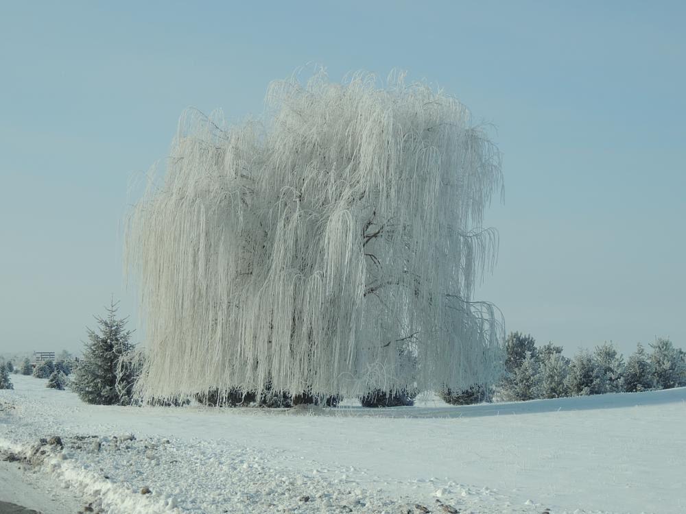 Photo in Random #tree #nature #frost #winter