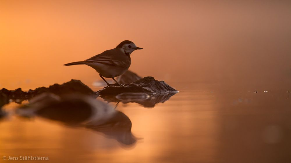 Photo in Animal #wagtail #birds #canon #floating blind
