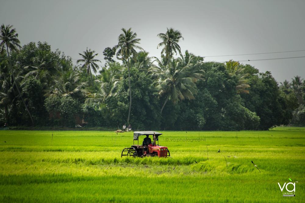 Photo in Landscape #kuttanadan kazhchakal #kuttanadu #edathuva #kerala padam #kerala #padam