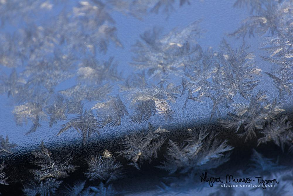 Photo in Nature #frost #yyc #calgary #february #cold #winter #snow