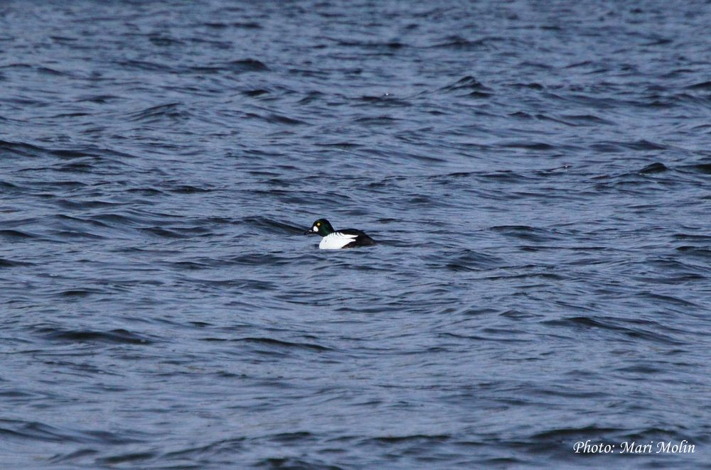 Photo in Animal #bird #sea #lonely #black #blue