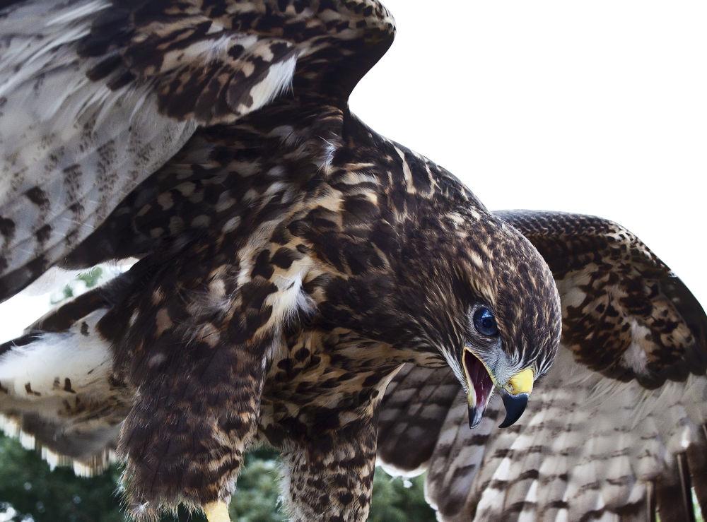 Photo in Random #falcon