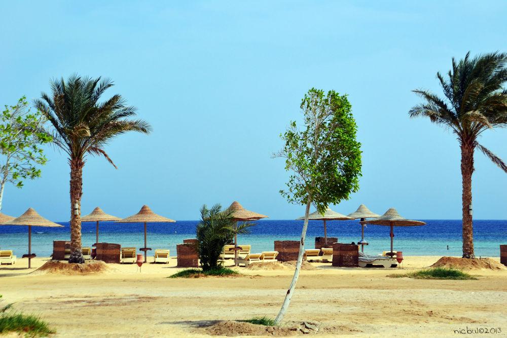 Photo in Landscape #marsaalam #landscape #sea #seaside #love #redsea #palm #lovesea #lovemarsaalam #ypa2013 #nature