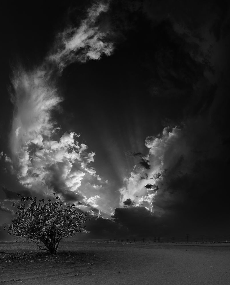 Photo in Black and White #nikon #d700 #14-24mm #wide #sunset #sun #setcloud #thunder #thunderstorm #plant #green