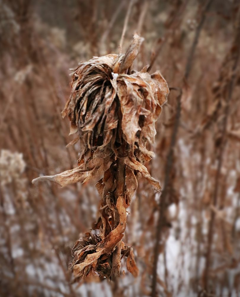 Photo in Nature #alien plant #snowy day #upstate ny