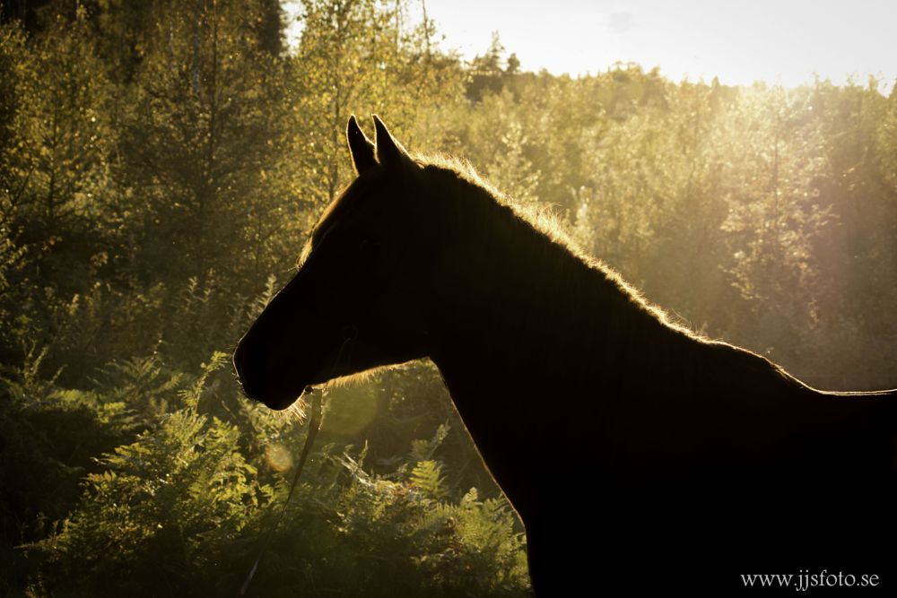 Photo in Animal #horse #nature #autum #sweden #animals #western