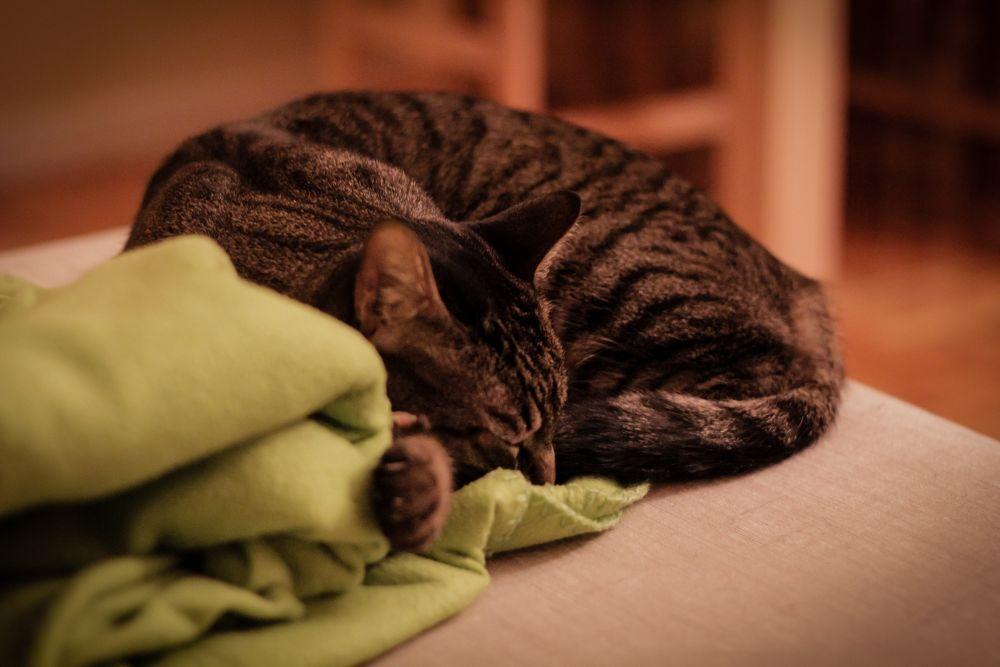 Photo in Random #charlie #cat #sleep #madrid #logroño