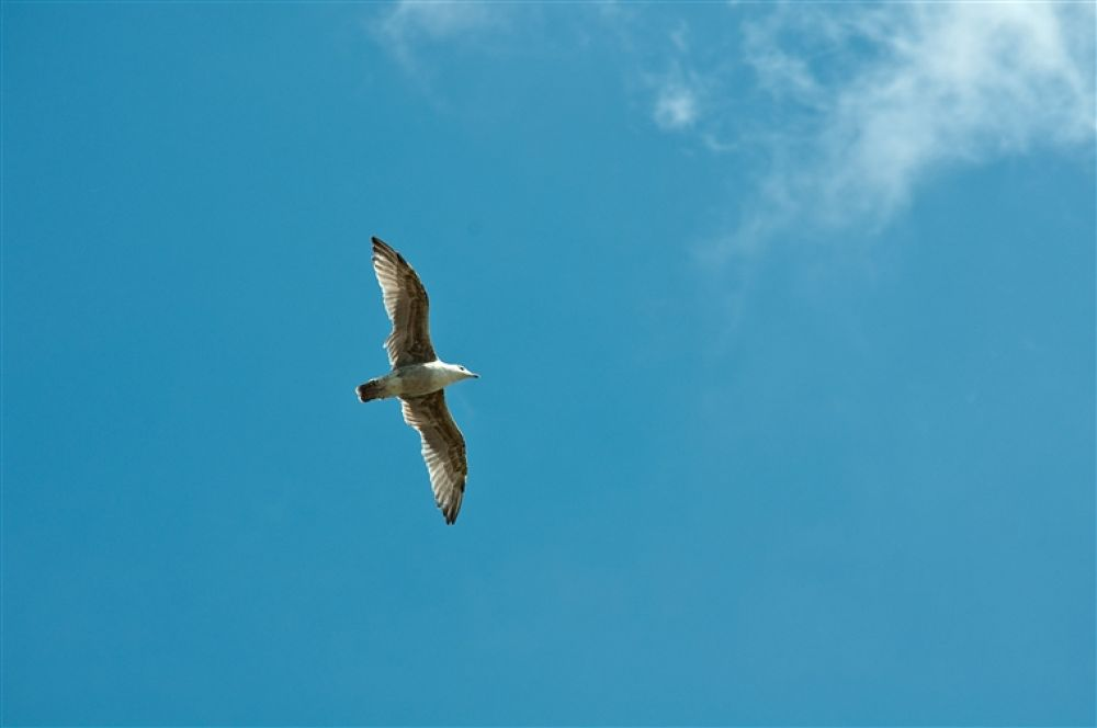 Photo in Random #mås #seagull