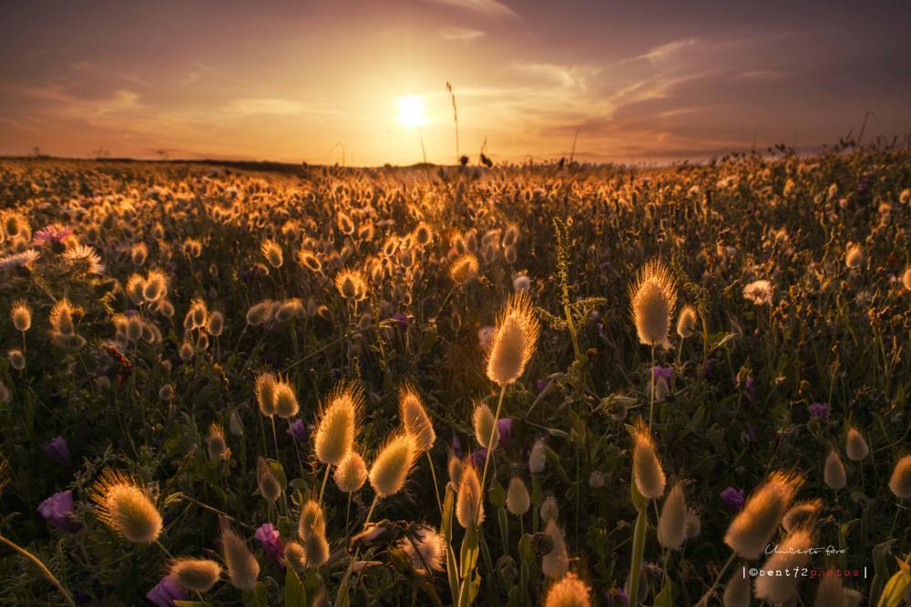 Photo in Landscape #spring #sun #sunset #landscape