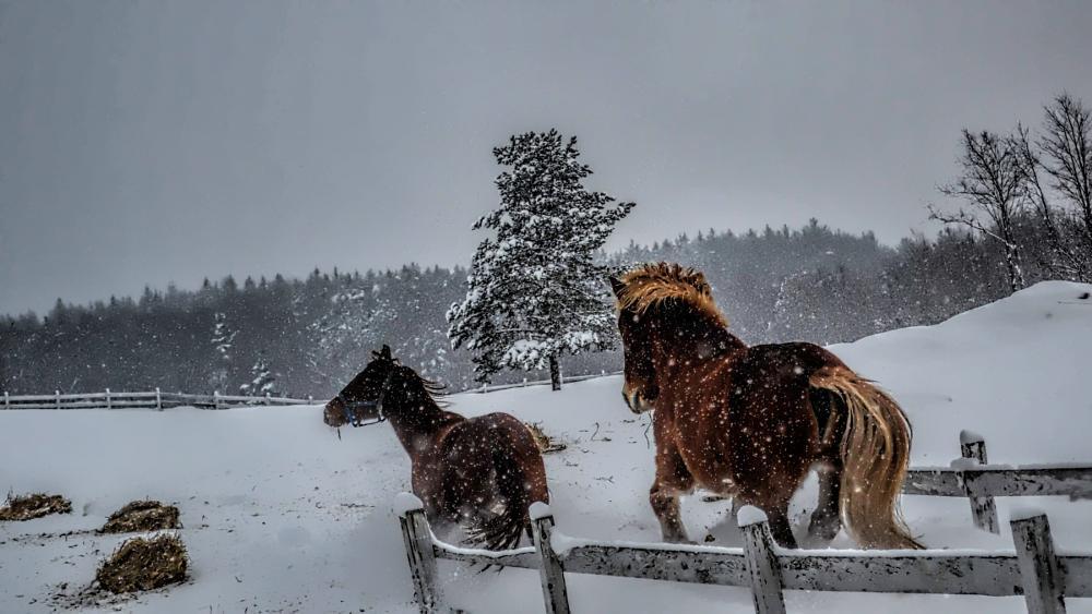 Photo in Animal #hores #snow #running