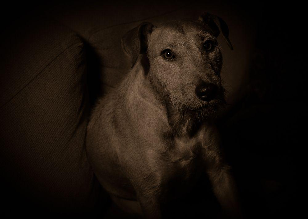 Photo in Random #dogpicture animalphoto