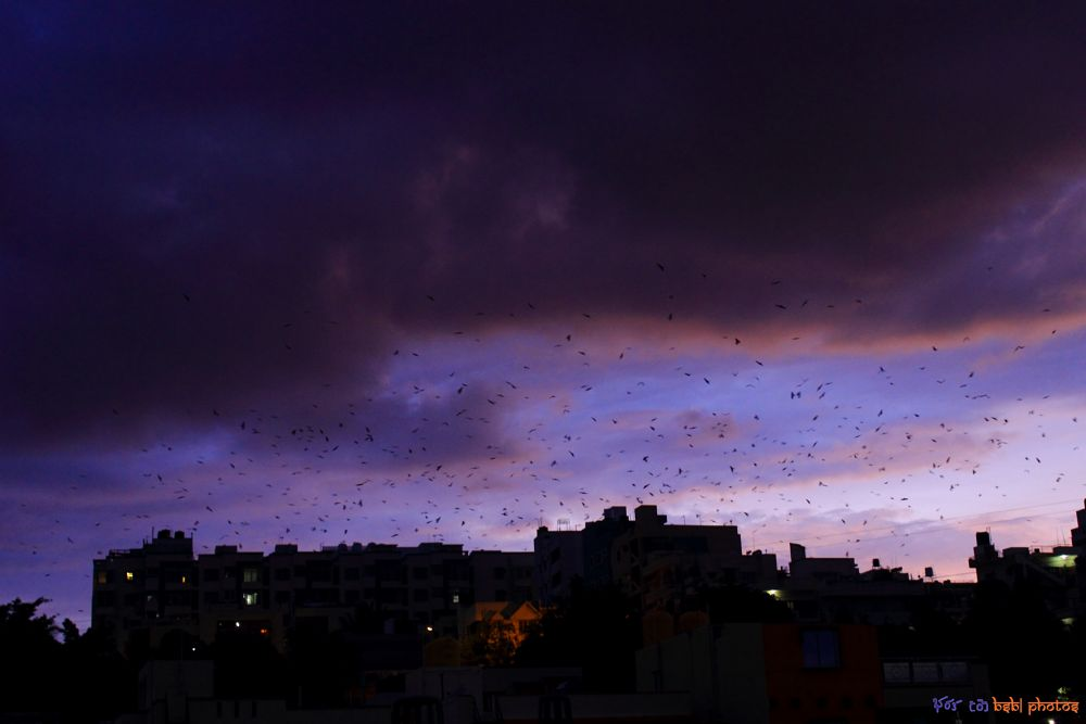 Photo in Cityscape #bird #birds #dusk