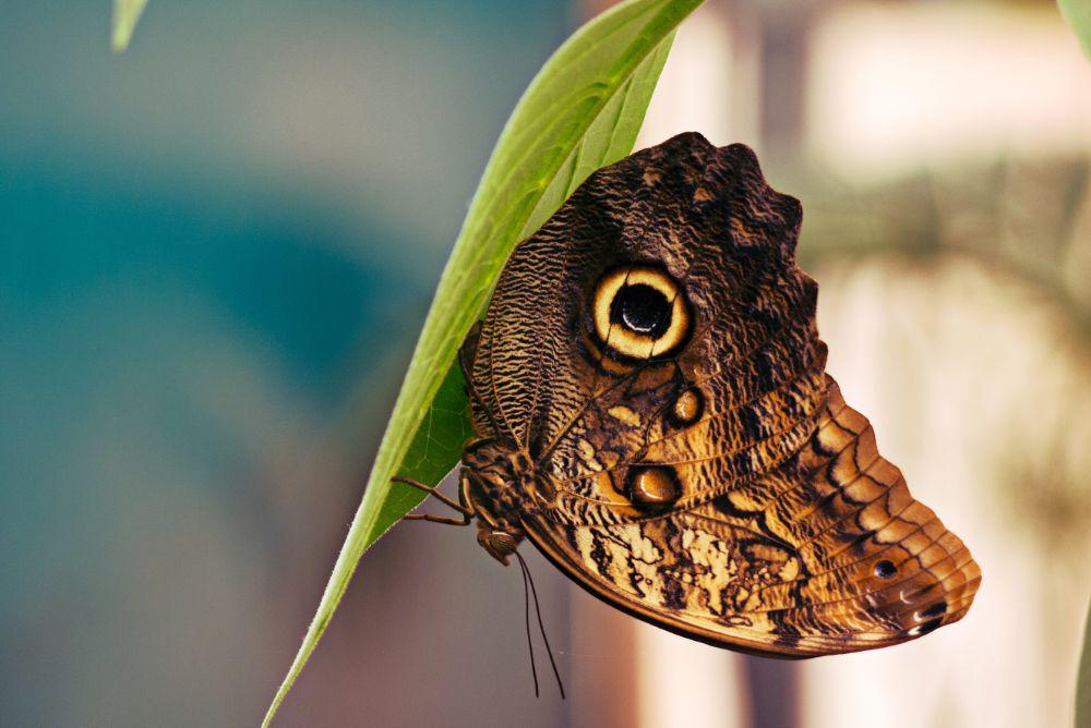 Photo in Animal #butterfly #big #museum #london #gf3 #panasonic