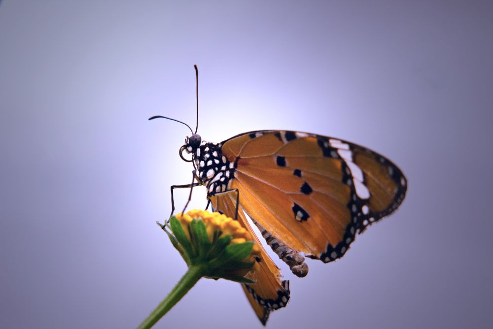 Photo in Nature #butterfly #flower #nature #gf3