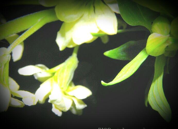 Photo in Macro #flowers #fiore #white #bianci #on black #su nero #wednesday