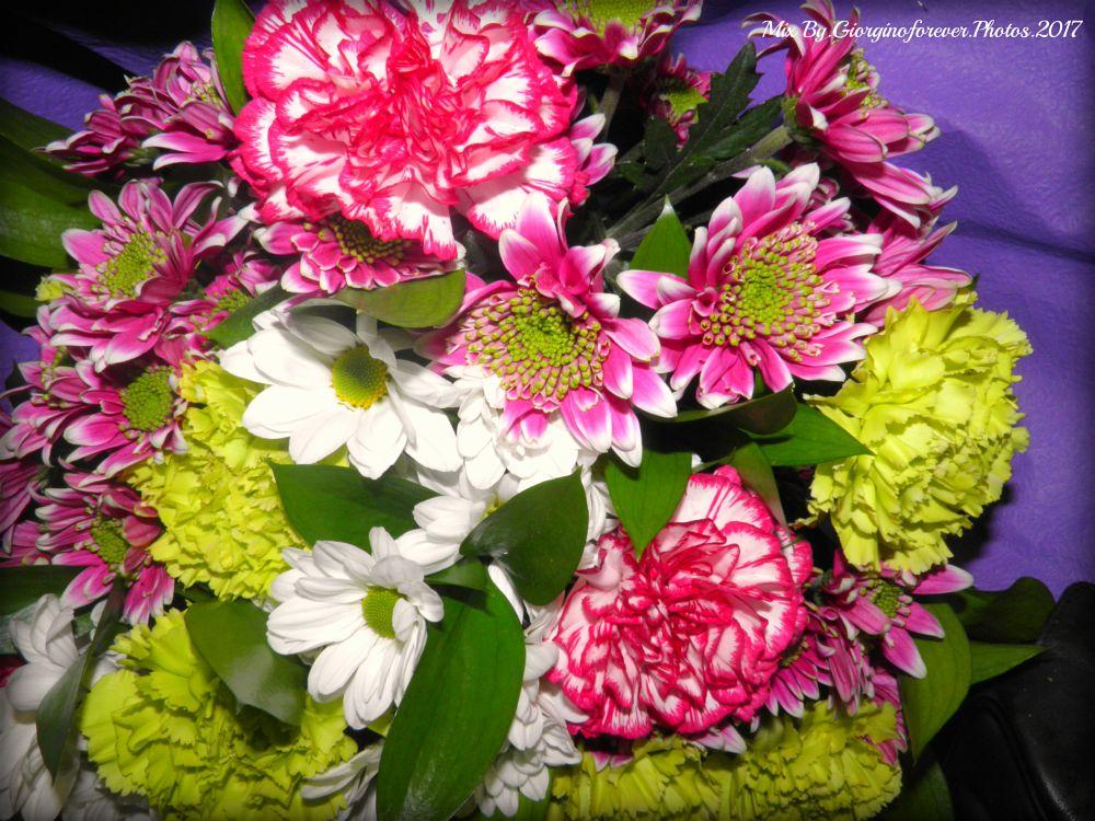 Photo in Macro #flowers #fiore #present #regalo