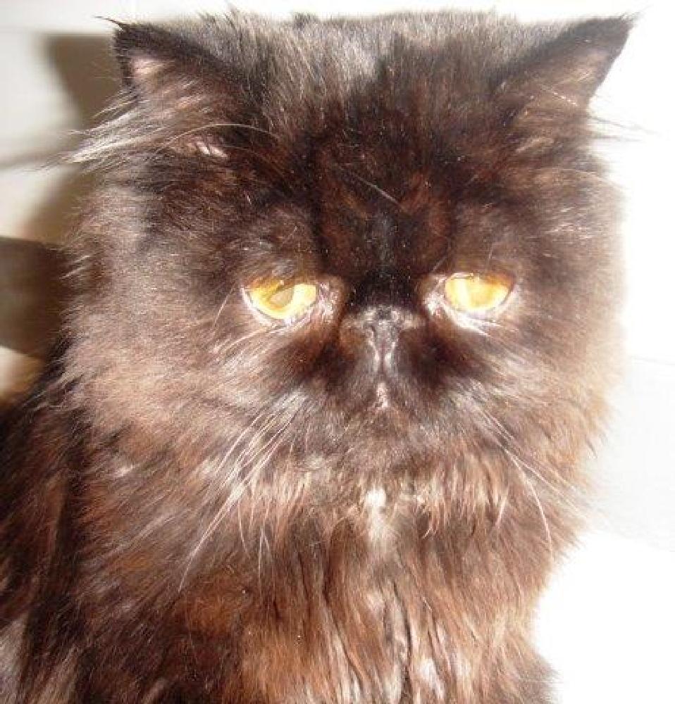 Photo in Nature #cat #gatto #persian #kitten