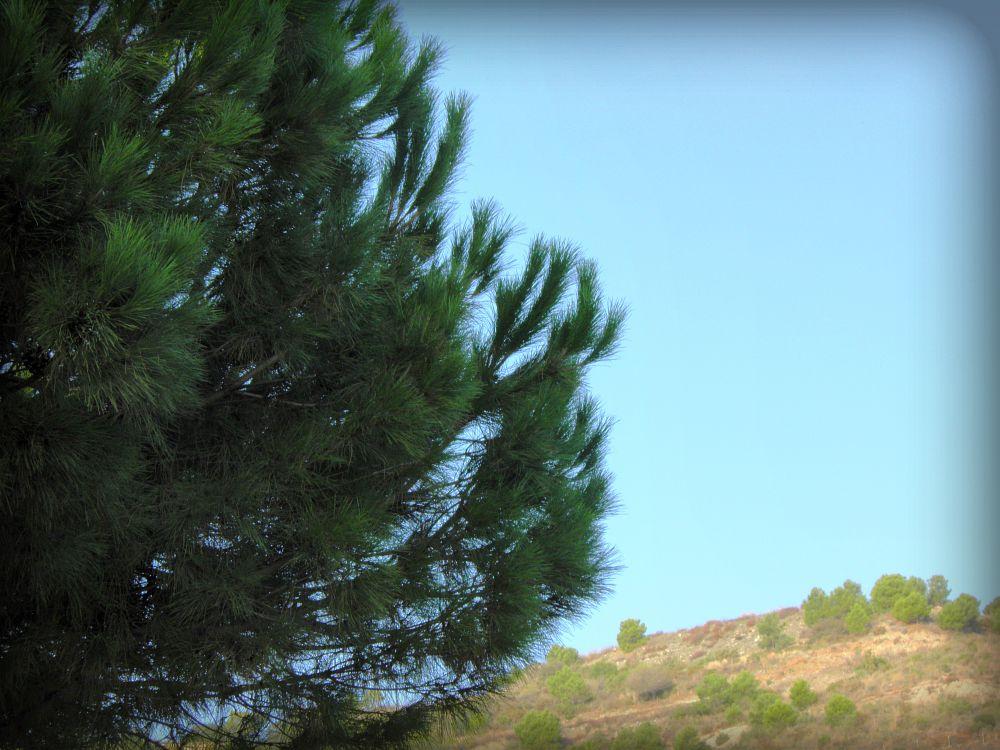 Photo in Landscape #morning #mattina #sun #sole #blue #skies #cielo #tree #albero #green #verde #hills #colline