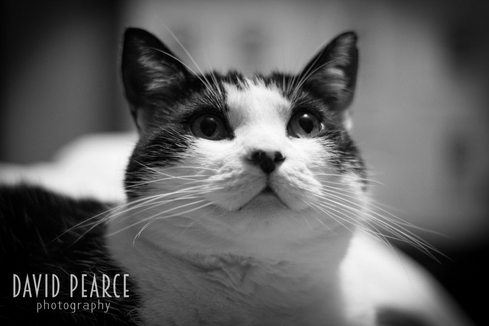 Photo in Black and White #cat #animal #black and white #nature